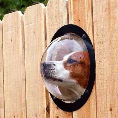 fence idea for small dog