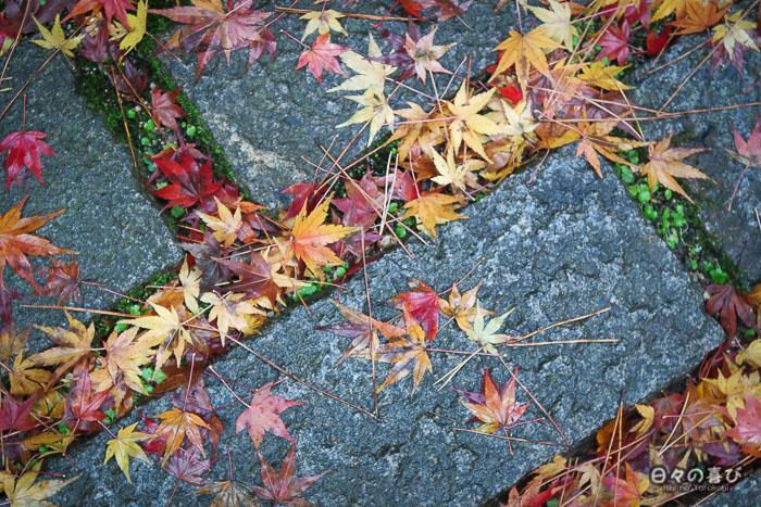 feuilles de momiji sur le sol, temple Chion-ji, Amanohashidate, Kyoto