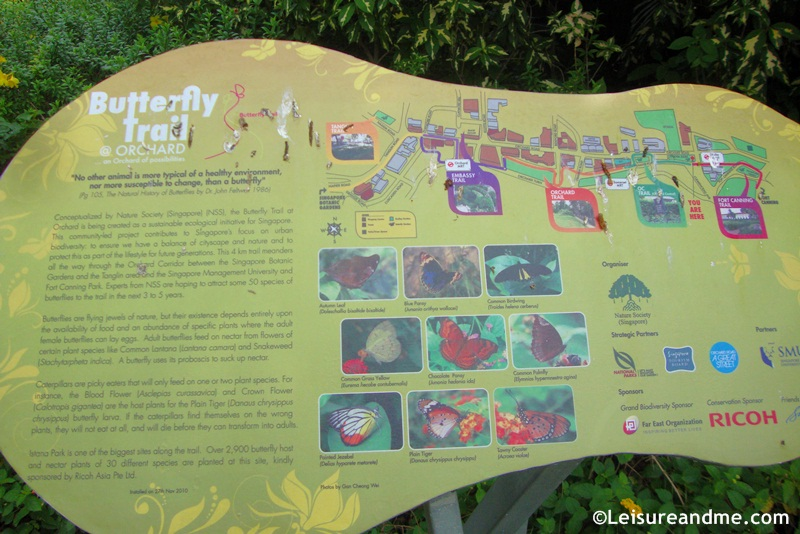 Butterfly Trail @Orchard Road - Spot at Dhoby Ghaut