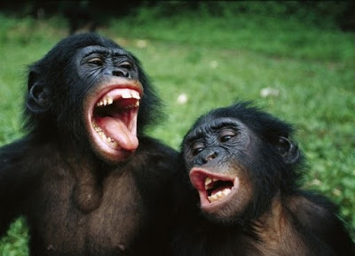 Melhores micos da TV