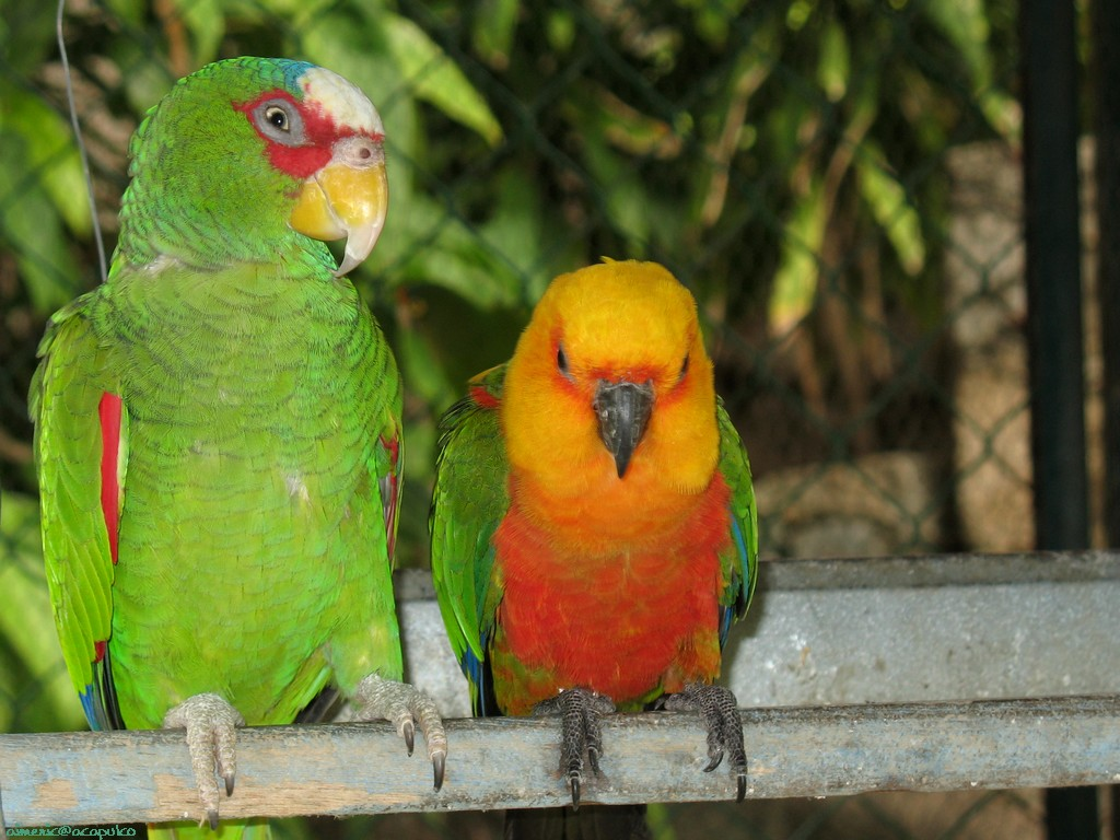Top 47 most dashing and beautiful parrot wallpapers in hd - Animal and bird hd wallpaper ...