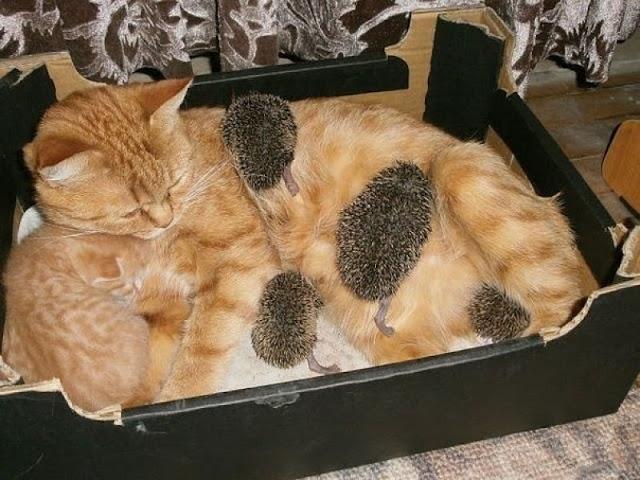 Чужих не бывает животные кормят чужих зверей кошка и ежики