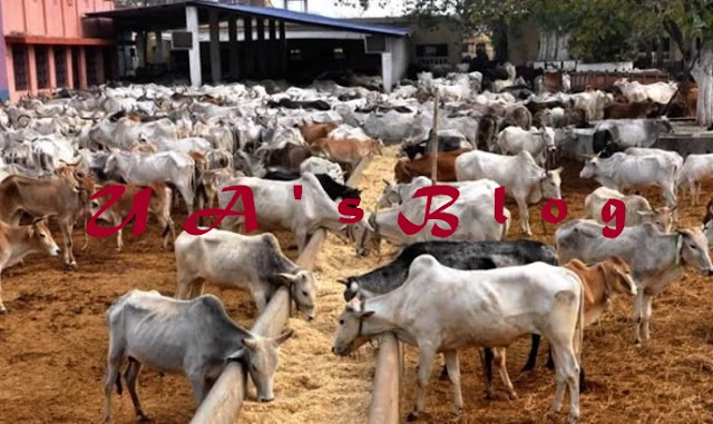 Ebonyi Rejects FG's Proposed Cattle Ranching
