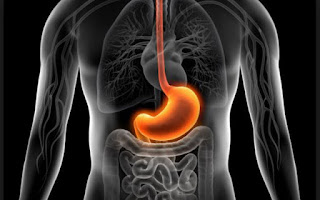 La importancia de la digestión en el cuerpo