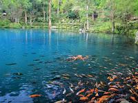 Situ Cicerem: Objek Wisata Telaga Biru di Kuningan yang Sayang untuk Dilewatkan