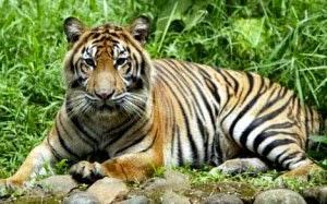 Gambar Hewan hewan Langka di indonesia