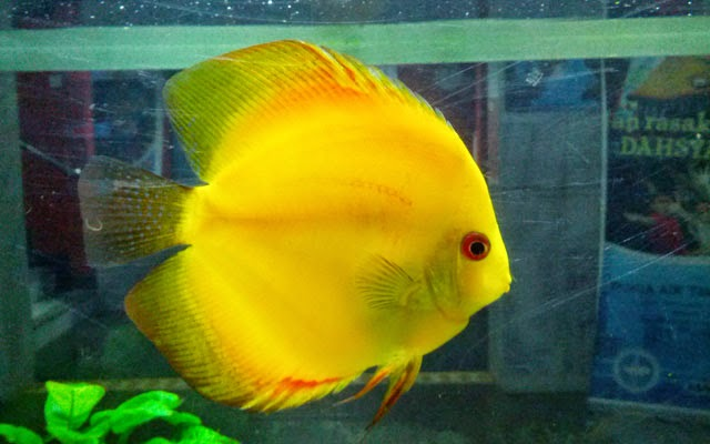Inilah Alasan Mengapa Ikan tidak Berkedip