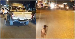 Εγκαταλελειμμένο σκυλάκι τρέχει για χιλιόμετρα πίσω από το αυτοκίνητο της οικογένειας που το παράτησε