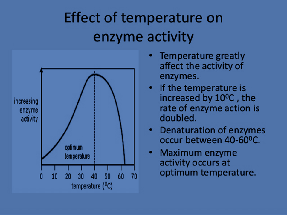 the effect of temperature on enzymatic activity essay Effects of temperature on the activity of lipase essay sample aim: to investigate the effects of temperature on the activity of lipase enzyme on milk which contain fats or lipids.