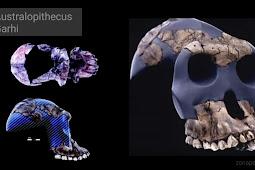 Ciri-Ciri Australopithecus Garhi
