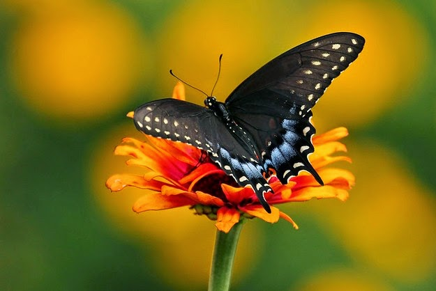 how-a-caterpillar-becomes-a-butterfly-4