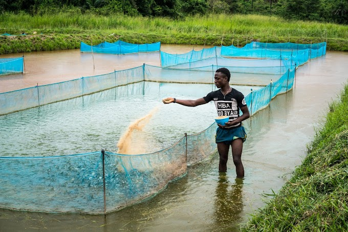 Fish Farming in India Guide : How to Start Fish Farming Business