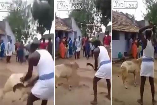 شاهد كيف انتقم خروف من رجل حاول ذبحه بطريقة وحشية! دون اي رحمة او اي انسانية.. هل استحق هذه الضربة من الخروف؟!