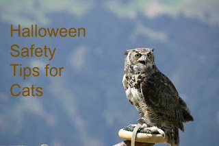 "A graphic depicting an owl. The graphic says, ""Halloween Safety Tips for Cats."""