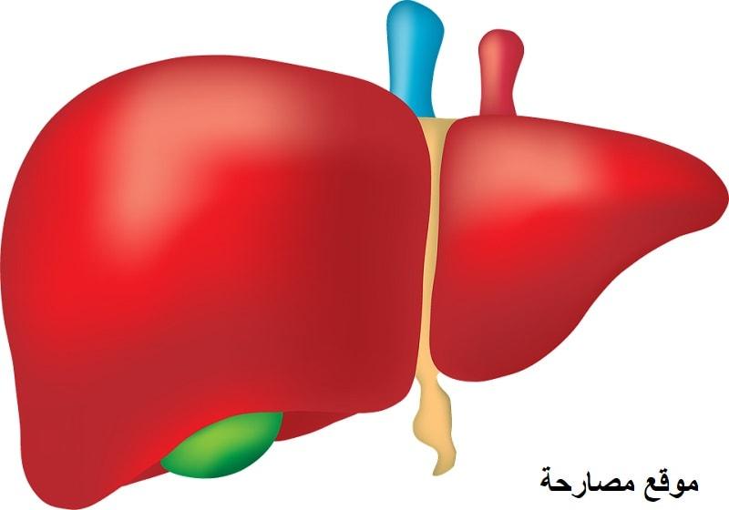 ما هو عمل الكبد في جسم الانسان ؟