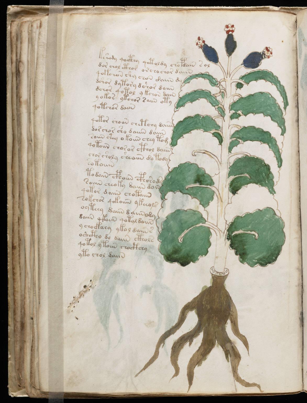 manuscrito072