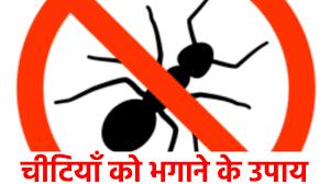 chiti bhagane ka gharelu upay hindi