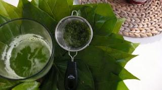efek samping daun bidara, cara membuat masker daun bidara, manfaat daun bidara untuk ruqyah, cara membuat teh daun bidara, cara minum daun bidara, khasiat daun bidara dalam perubatan islam, reaksi setelah minum daun bidara, cara mengkonsumsi daun bidara