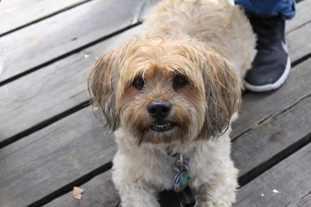 Wandern mit gehfaulen Kindern und Hund mit kurzen Beinen