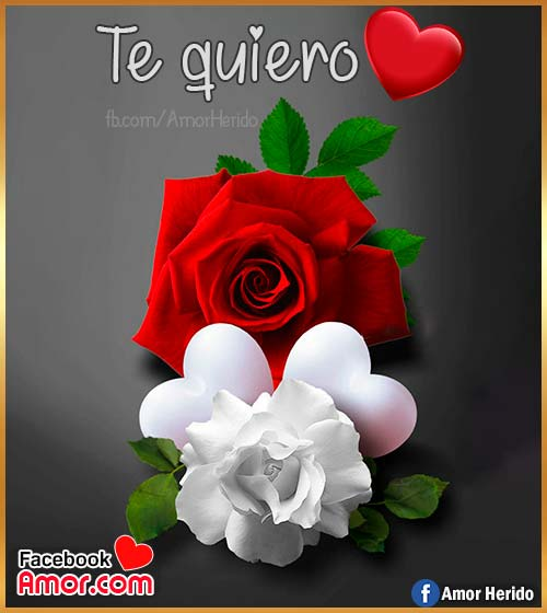 te quiero flores rosas