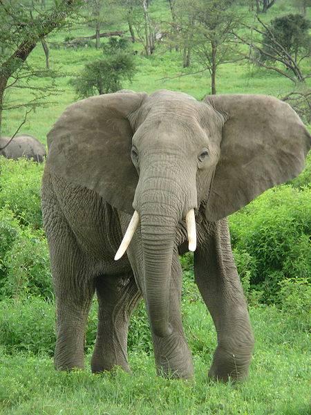 The Largest Animals