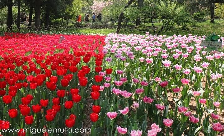 Flores-Jingshan-Park