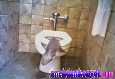 Hal Aneh Ditemukan Di Kloset Toilet