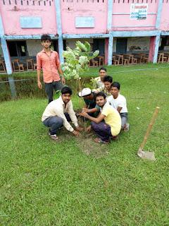 abvp-madhubani-plantation