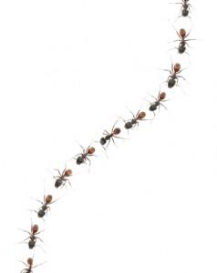 3 خطوات بسيطة جداً للتخلص من النمل .