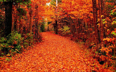 autumnal-red-leaves-pictures