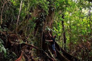 MCB lança livro 'Remanescentes da Mata Atlântica – as grandes árvores da floresta original e seus vestígios'