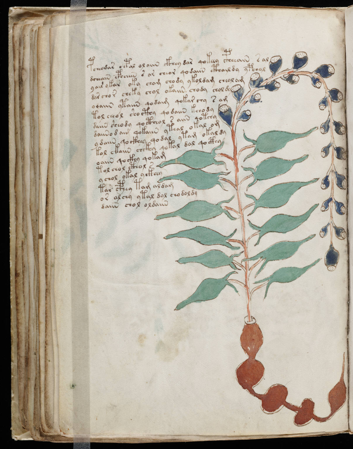 manuscrito106