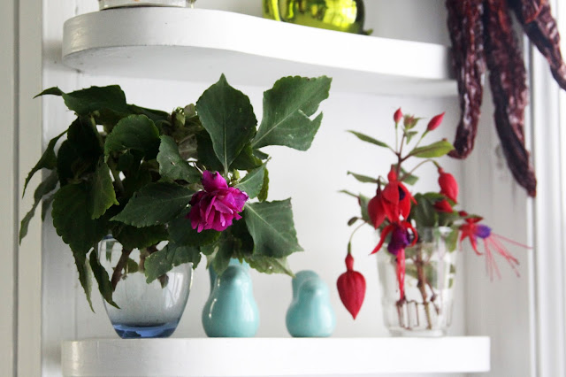 cuttings, plant propagation, impatiens, fuchsia, Anne Butera, My Giant Strawberry