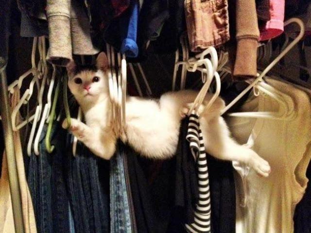Estou escolhendo a sua roupa