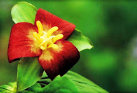 https://2.bp.blogspot.com/-SCMocKYXL18/W1jQZHH8GoI/AAAAAAAAQY0/Dl40_zzHXDUwDS7ssXFoVmQF9Uin7csmgCLcBGAs/s1600/fungsi-bunga-pada-tumbuhan.jpg