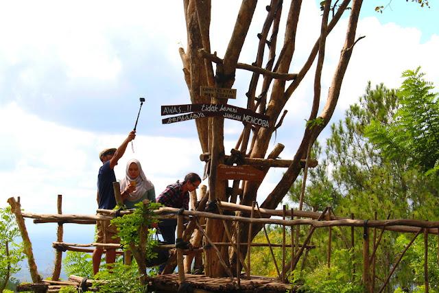 spot foto hutan pinus imogiri