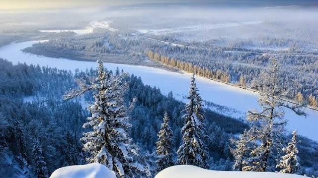 Siberia Jungle