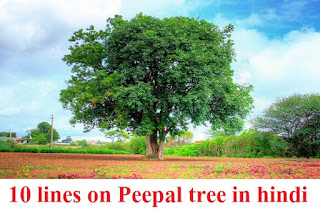 10 lines on Peepal tree in hindi