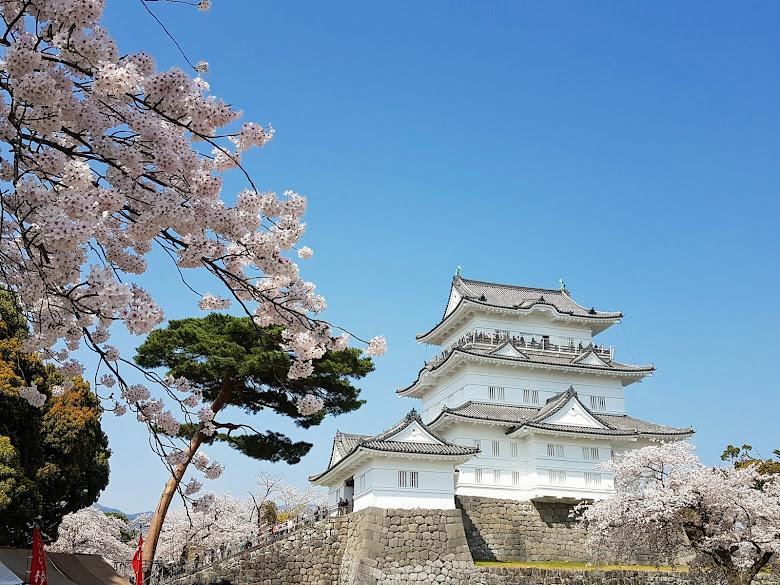 櫻花與小田原城