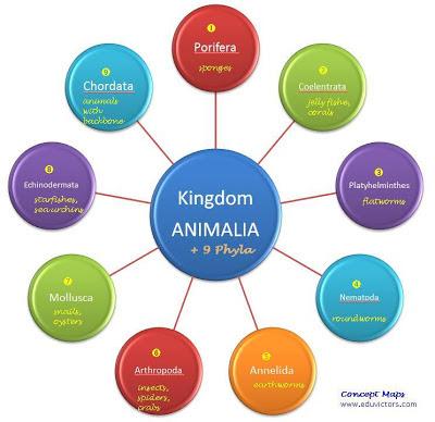 Kindom Animalia is divided into nine phyla