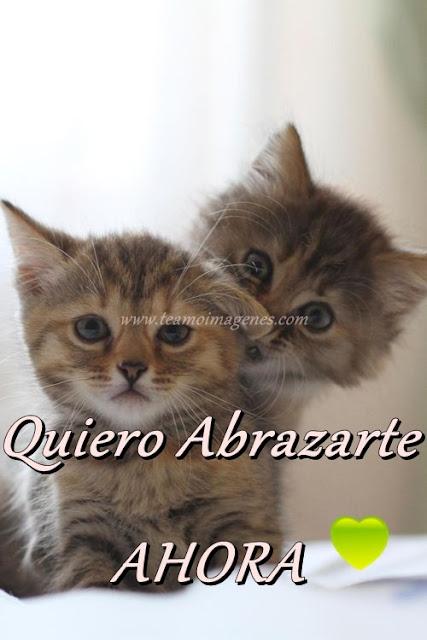 imagen de gatito diciendo quiero abrazarte ahora