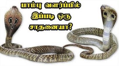 Paampu Valarpil Ippadiyoru Saathanaiyaa..?