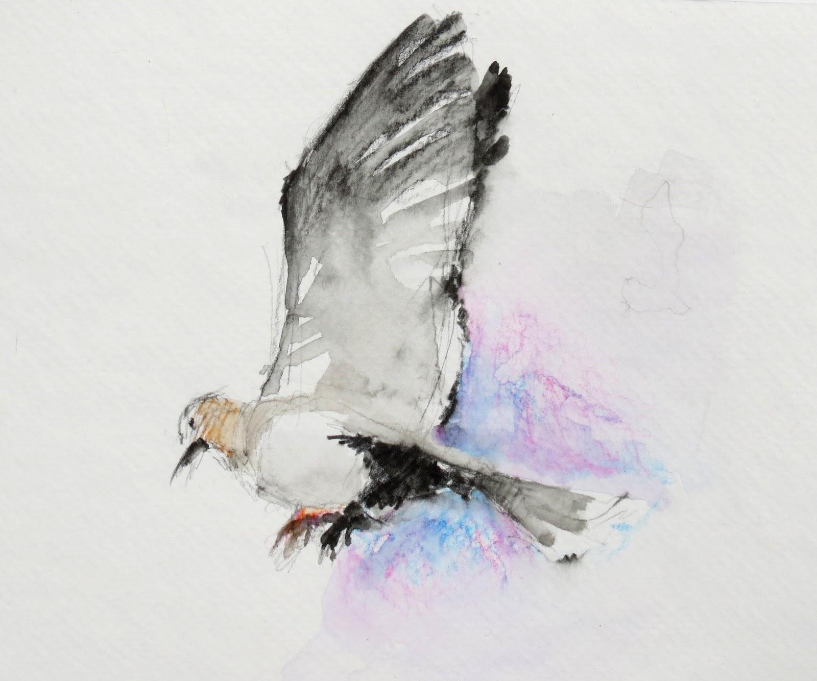 V    Vaughan Arts: Dove Sketch