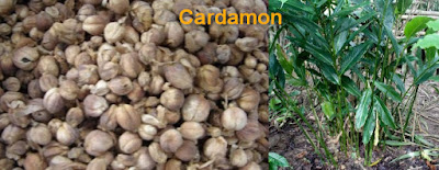 herbal viagra use cardamon