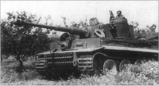 Tiger «142»