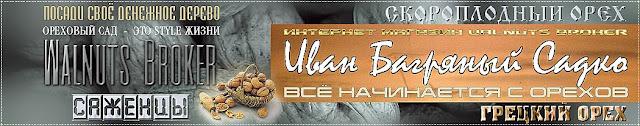 Саженцы грецкого ореха Садко, 0957351986, 0985674877, Купить Walnuts Broker