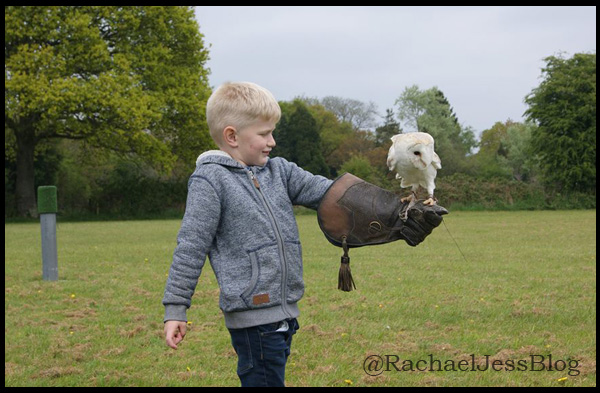Activities to do at Sandy Balls in the New Forest include a detailed talk on Falconry and the chance to fly an owl