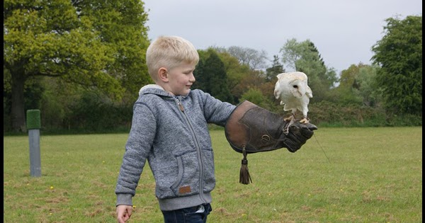 Activities At Sandy Balls In The New Forest Falconry A