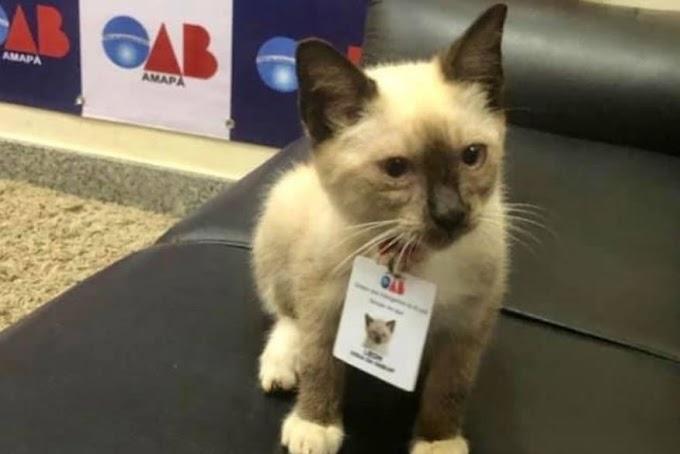 LEÓN: Filhote de gato salvo do frio e da chuva é adotado e vira 'vigia' em sede da OAB.