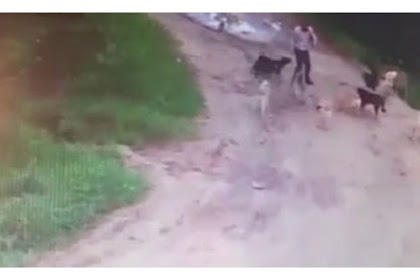 Ngeri, Pria Mabuk Jadi Santapan Kelompok Anjing Liar
